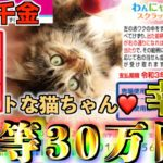 【わんにゃんスクラッチ】1等30万円『ねこミックス8』ラッキー3で猫が幸運を運んできた