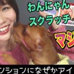 【犬猫の宝くじ】わんにゃんスクラッチを買ってみた!犬と大興奮…