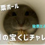 念願の筒で粟ボール&2月の宝くじチャレンジ☆