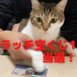 第8話目 衝撃 宝くじを当選させる猫がこちらです